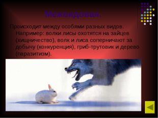 Межвидовая. Происходит между особями разных видов. Например: волки лисы охотя