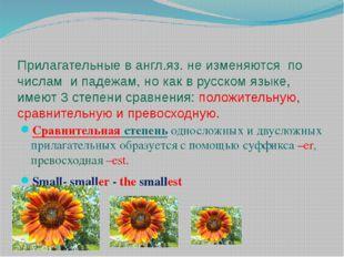 Прилагательные в англ.яз. не изменяются по числам и падежам, но как в русском