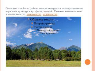 Сельское хозяйство района специализируется на выращивании зерновых культур, к