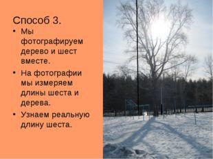 Способ 3. Мы фотографируем дерево и шест вместе. На фотографии мы измеряем дл