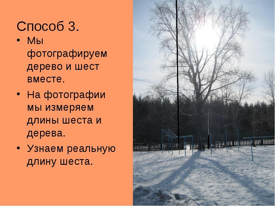 Способ 3. Мы фотографируем дерево и шест вместе. На фотографии мы измеряем дл...