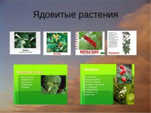 Ядовитые растения