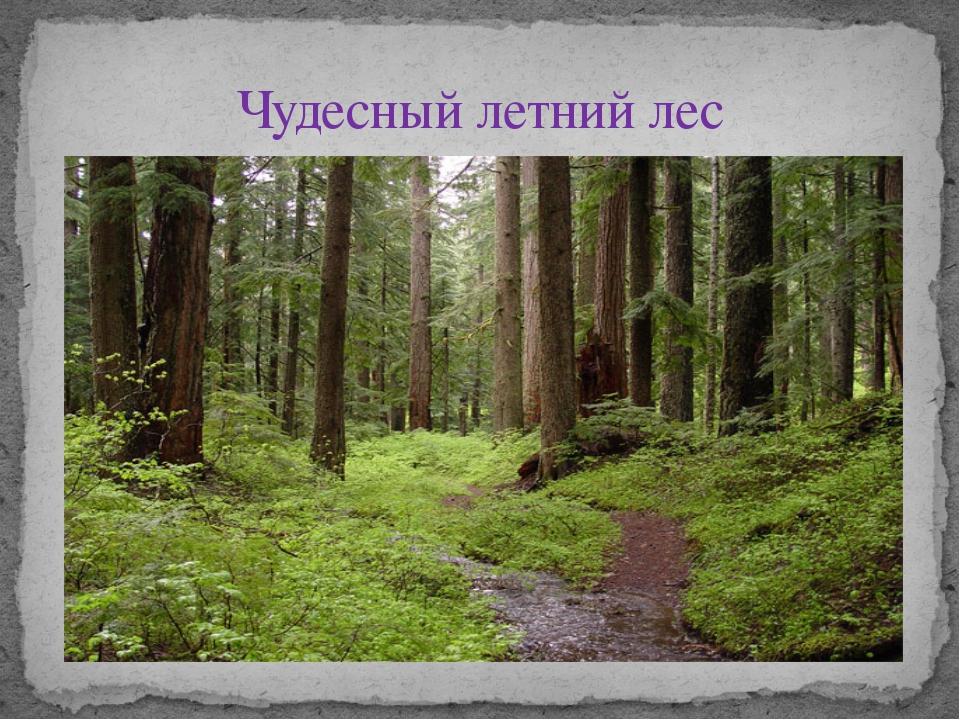 Чудесный летний лес
