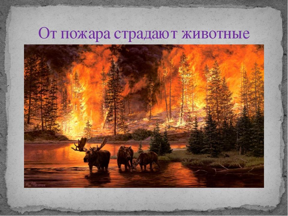 От пожара страдают животные