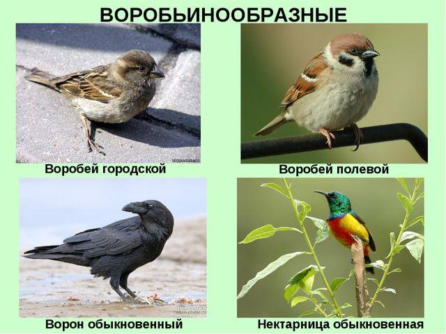 ВОРОБЬИНООБРАЗНЫЕ Воробей городской Воробей полевой Ворон обыкновенный Нектар...