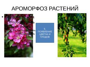 АРОМОРФОЗ РАСТЕНИЙ 5. ПОЯВЛЕНИЕ ЦВЕТКА И ПЛОДОВ