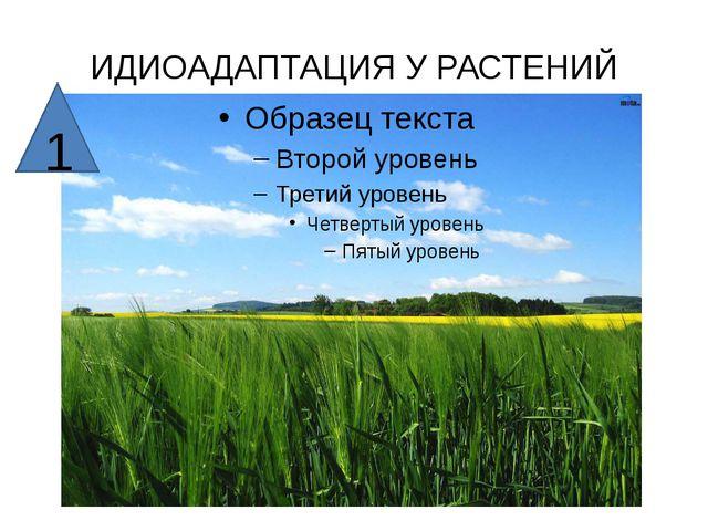 ИДИОАДАПТАЦИЯ У РАСТЕНИЙ 1