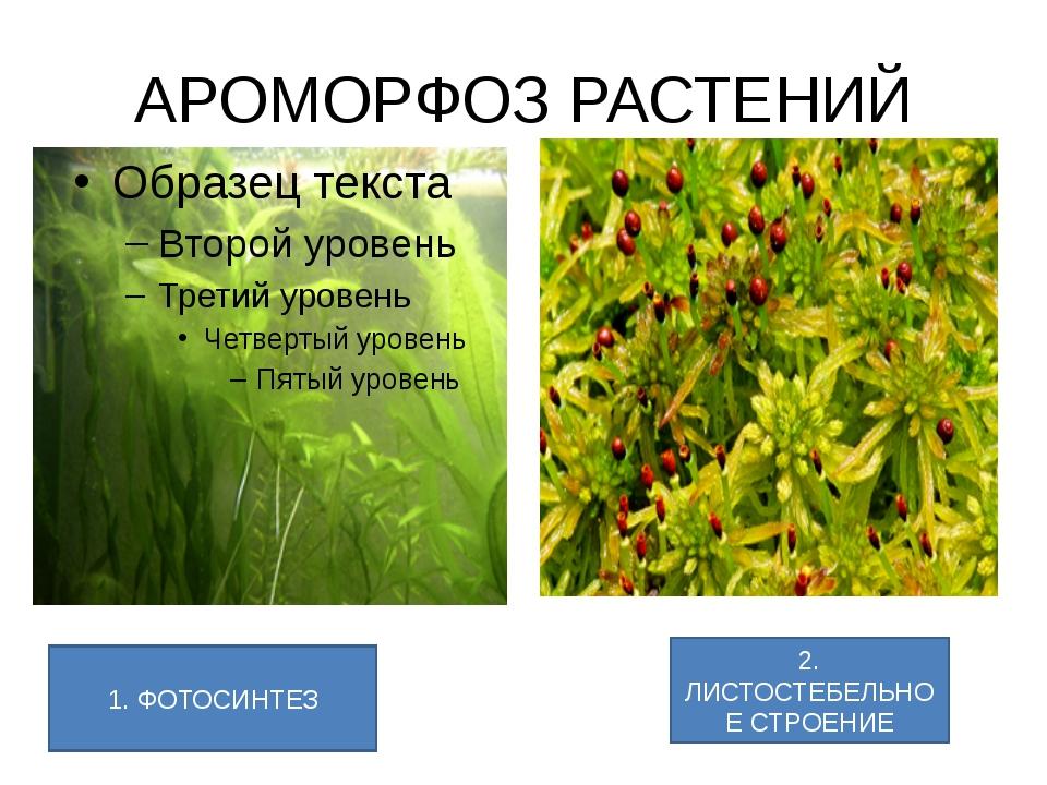 АРОМОРФОЗ РАСТЕНИЙ 1. ФОТОСИНТЕЗ 2. ЛИСТОСТЕБЕЛЬНОЕ СТРОЕНИЕ