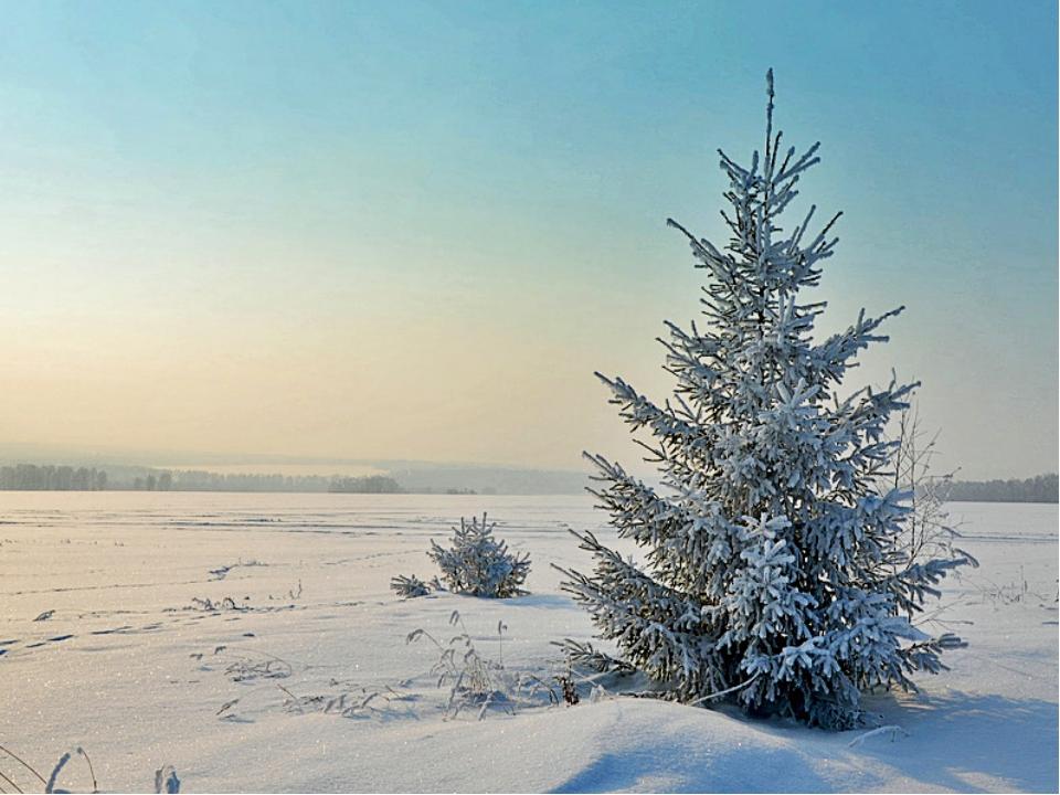 Картинки молодых елочек в зимнем лесу