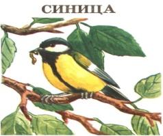 H:\Картинки для дня птиц\Птица 2.jpg