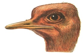 H:\Картинки для дня птиц\Голова 1.jpg