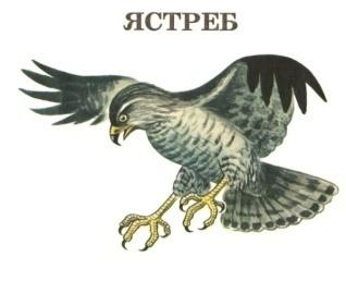 H:\Картинки для дня птиц\Птица 5.jpg