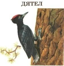 H:\Картинки для дня птиц\Птица 4.jpg