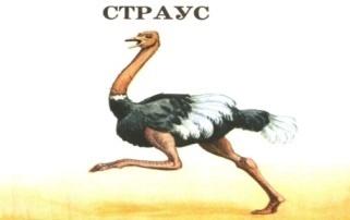 H:\Картинки для дня птиц\Птица 1.jpg