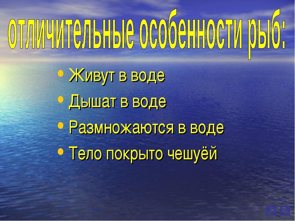 Живут в воде Дышат в воде Размножаются в воде Тело покрыто чешуёй