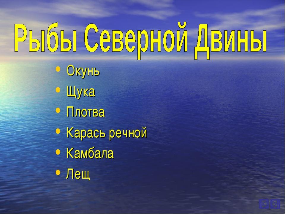 Окунь Щука Плотва Карась речной Камбала Лещ