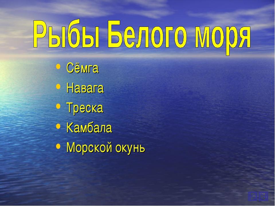 Сёмга Навага Треска Камбала Морской окунь