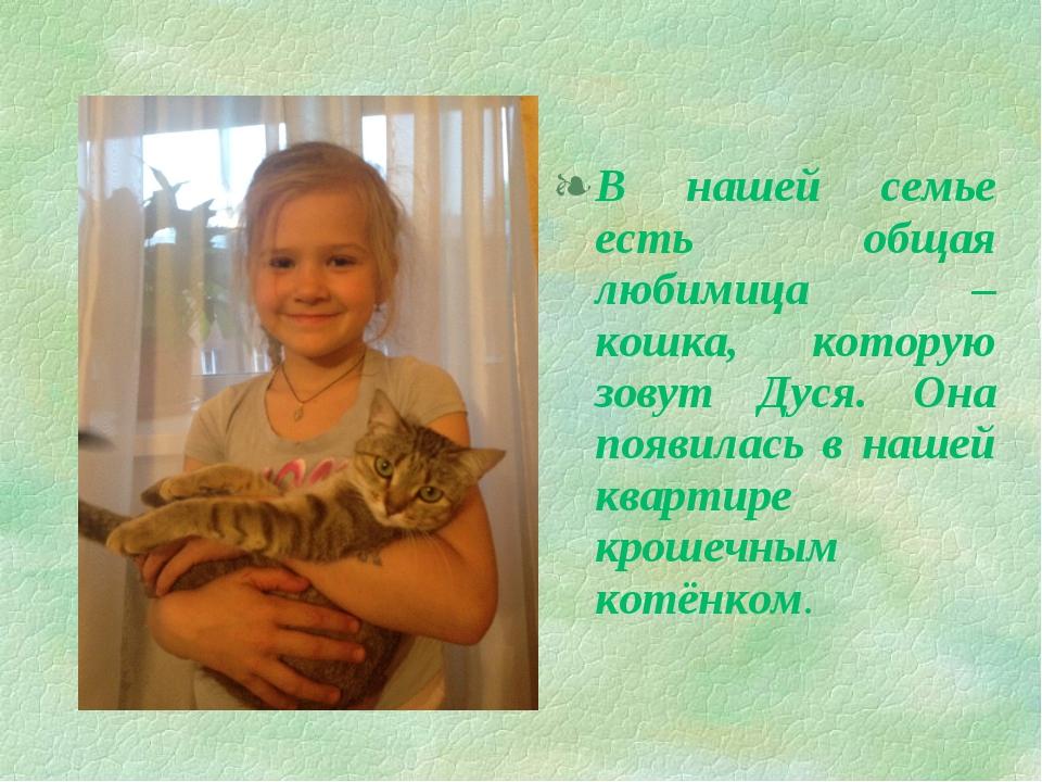 В нашей семье есть общая любимица – кошка, которую зовут Дуся. Она появилась...