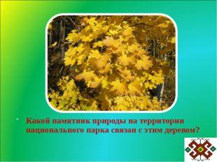 Какой памятник природы на территории национального парка связан с этим деревом?