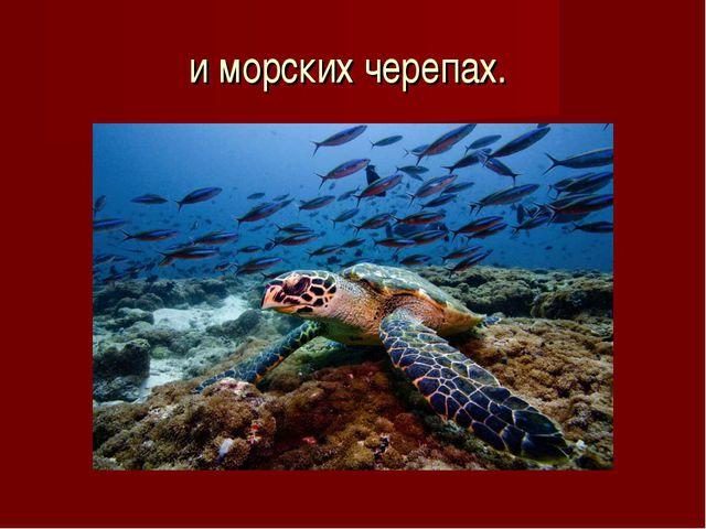 и морских черепах.