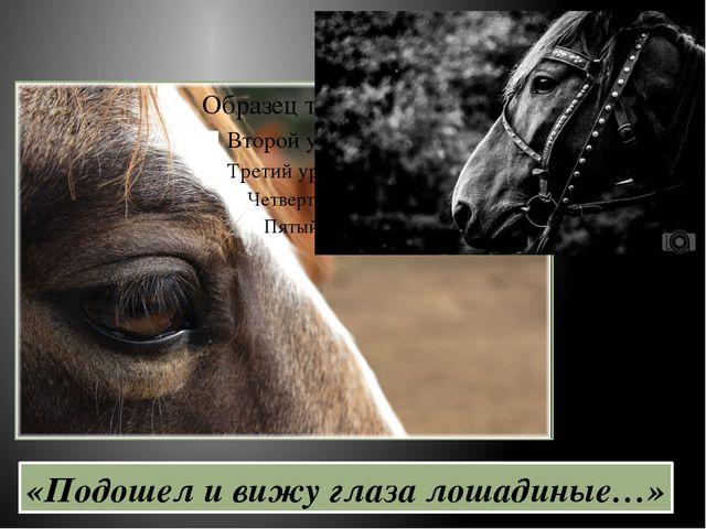«Подошел и вижу глаза лошадиные…»