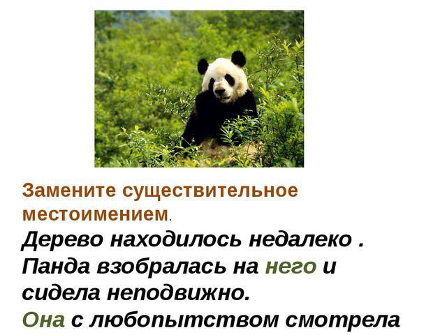 Замените существительное местоимением. Дерево находилось недалеко . Панда взо...