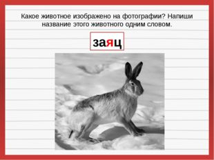 Какое животное изображено на фотографии? Напиши название этого животного одни