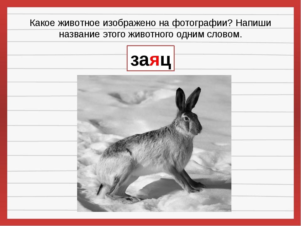 Какое животное изображено на фотографии? Напиши название этого животного одни...