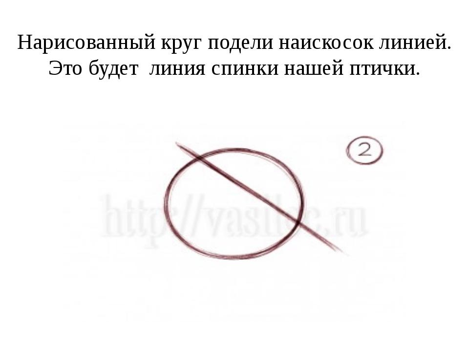 Нарисованный круг подели наискосок линией. Это будет линия спинки нашей птички.