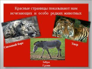 Красные страницы показывают нам исчезающих и особо редких животных Снежный ба