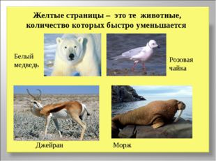 Желтые страницы – это те животные, количество которых быстро уменьшается Белы