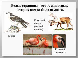 Белые страницы – это те животные, которых всегда было немного. Скопа Северный