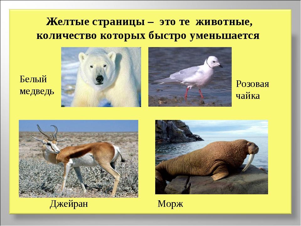 Желтые страницы – это те животные, количество которых быстро уменьшается Белы...