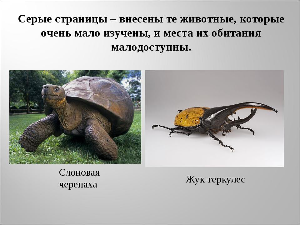 Серые страницы – внесены те животные, которые очень мало изучены, и места их...