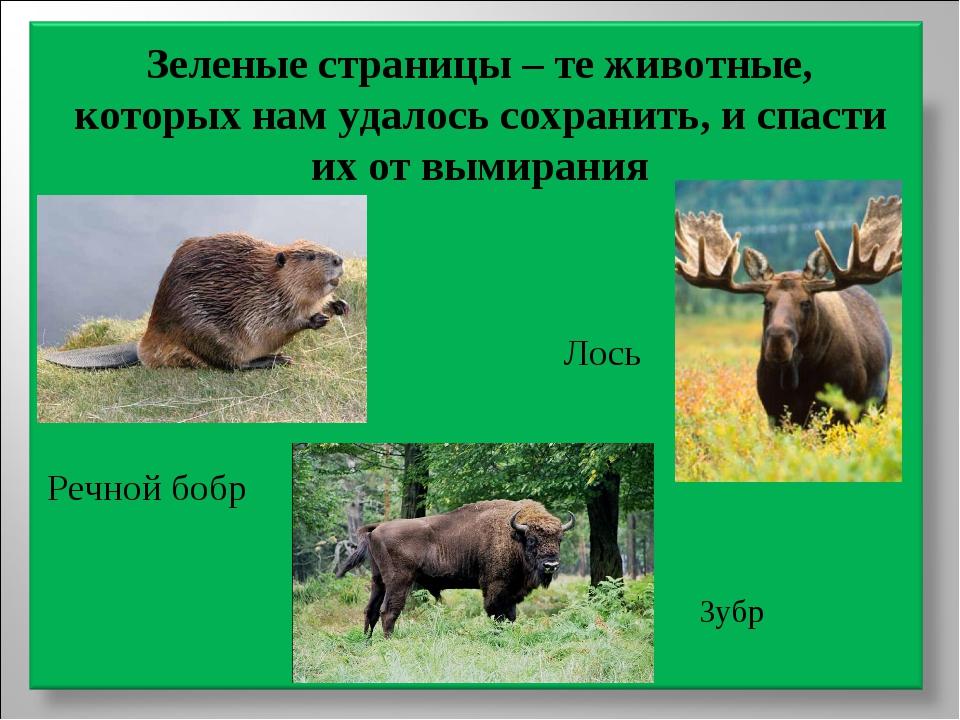 Зеленые страницы – те животные, которых нам удалось сохранить, и спасти их от...