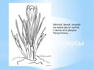 Жёлтый, белый, голубой; На земле растут пустой, У весны есть фокусы: Распусти