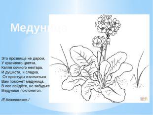 Это прозвище не даром, У красивого цветка, Капля сочного нектара, И душиста,