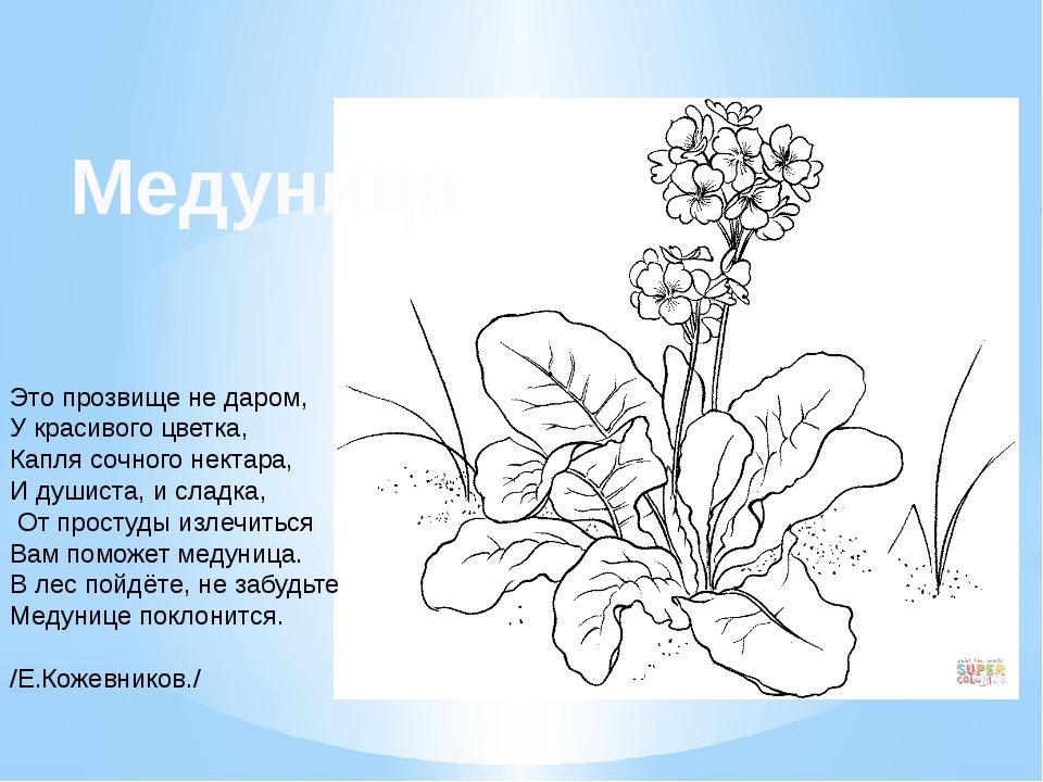Это прозвище не даром, У красивого цветка, Капля сочного нектара, И душиста,...