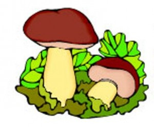Средняя группа программное содержание лепка грибы