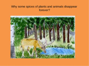 Why some spices of plants and animals disappear forever?