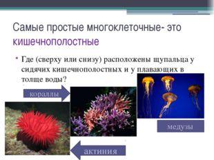 Самые простые многоклеточные- это кишечнополостные Где (сверху или снизу) рас