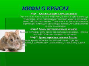 МИФЫ О КРЫСАХ Миф 1. Крыса выживет в любых условиях Они могут не есть и не пи
