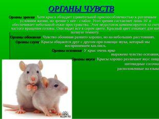 ОРГАНЫ ЧУВСТВ Органы зрения. Хотя крыса обладает удивительной приспособляемос