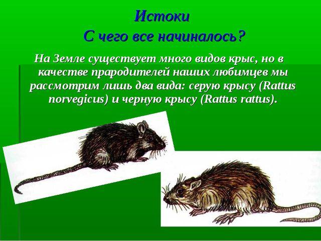Истоки С чего все начиналось? На Земле существует много видов крыс, но в каче...