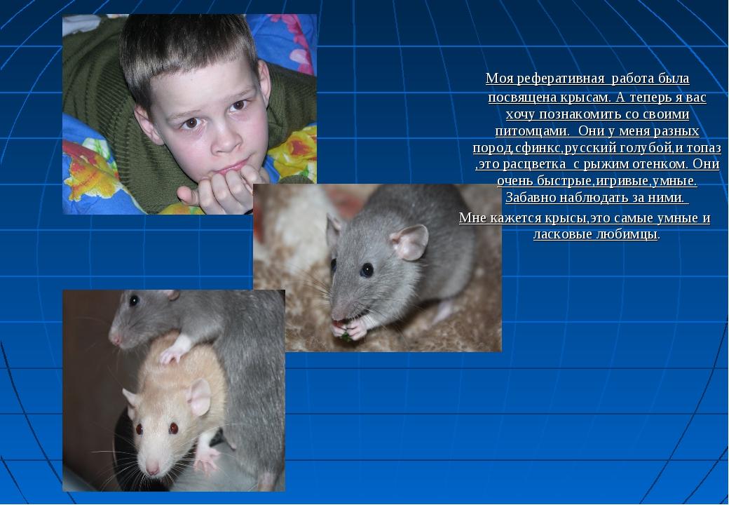 Моя реферативная работа была посвящена крысам. А теперь я вас хочу познакоми...