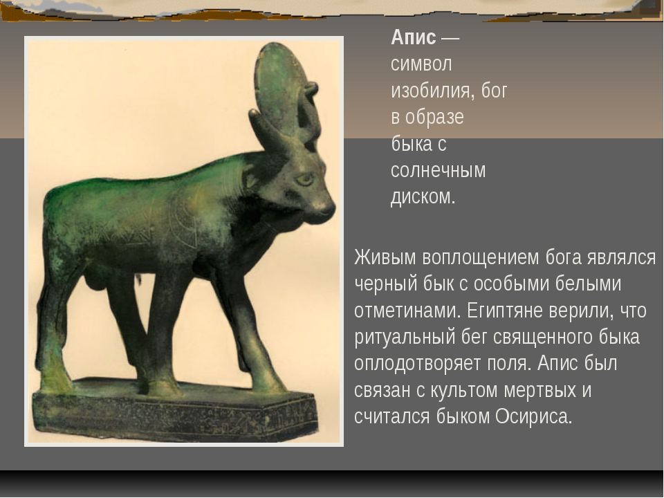 Апис — символ изобилия, бог в образе быка с солнечным диском. Живым воплощени...