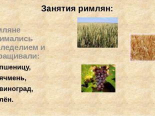 Занятия римлян: Римляне занимались земледелием и выращивали: пшеницу, ячмень,