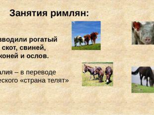 Занятия римлян: Разводили рогатый скот, свиней, коней и ослов. Италия – в пер