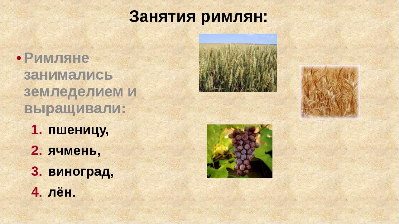 Занятия римлян: Римляне занимались земледелием и выращивали: пшеницу, ячмень,...