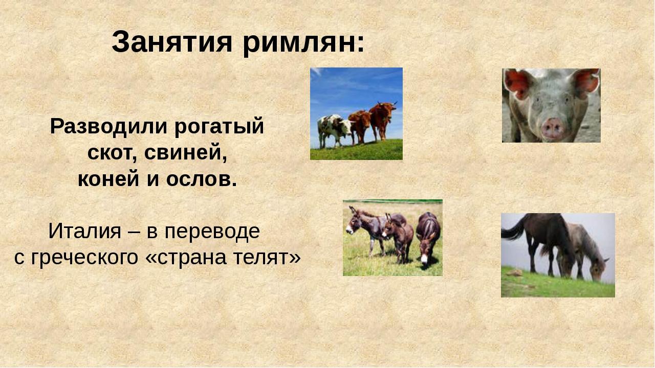 Занятия римлян: Разводили рогатый скот, свиней, коней и ослов. Италия – в пер...